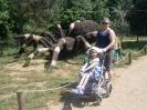 Wycieczka szkolna do Parku Rozrywki Gigaowadów w Lubnicy